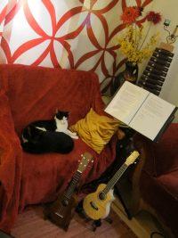 Die MuMaLau Katzen Carlos und Carla vorm Uke spielen